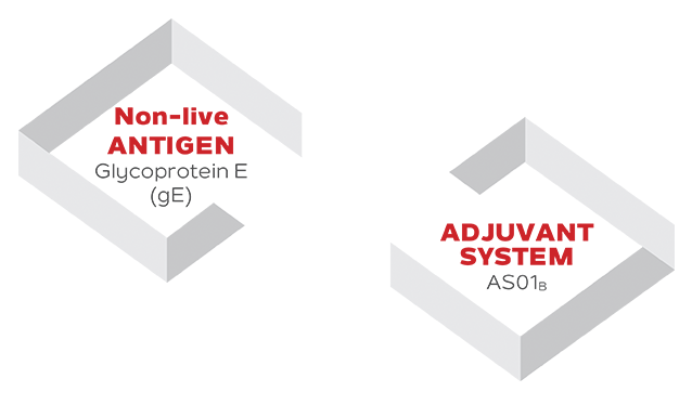 Visual shows the interaction of the antigen and adjuvant components of SHINGRIX. For any additional questions please call GSK customer service at 1-800-387-7374.