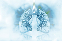 Respiratory_Humanlungs